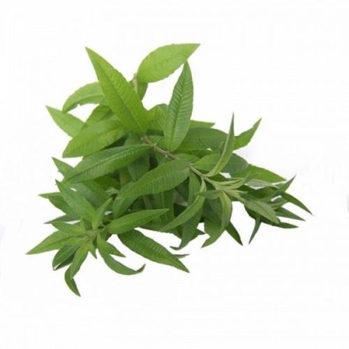 BIO Eisenkraut (Verbena officinalis L.) (10g)