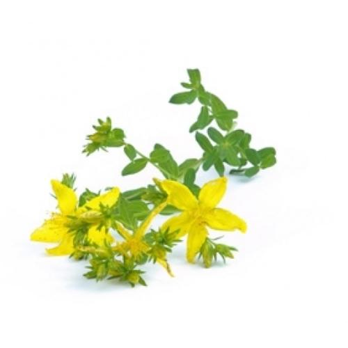 BIO Johanniskraut (Hyperici herba) (10g)