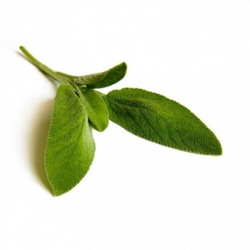 BIO Salbei (Salvia officinalis L.) (10g)