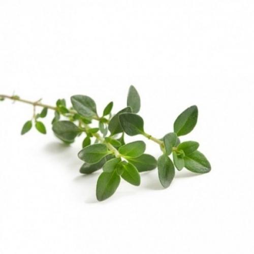 BIO Thymian (Thymus vulgaris L.) (10g)