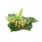BIO Lindenblüten  (Tilia cordata MILL.) (10g)